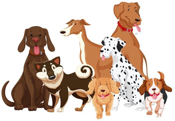 Diferentes tipos de perros