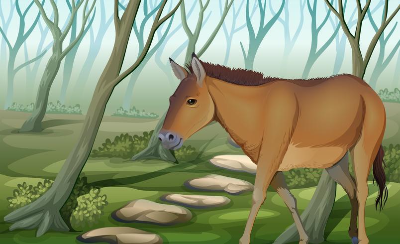 Um cavalo na floresta