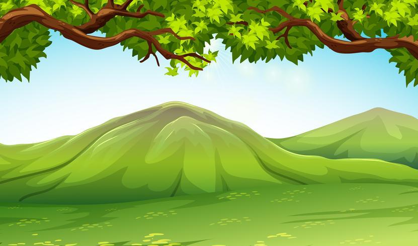 Scen med moutains och träd