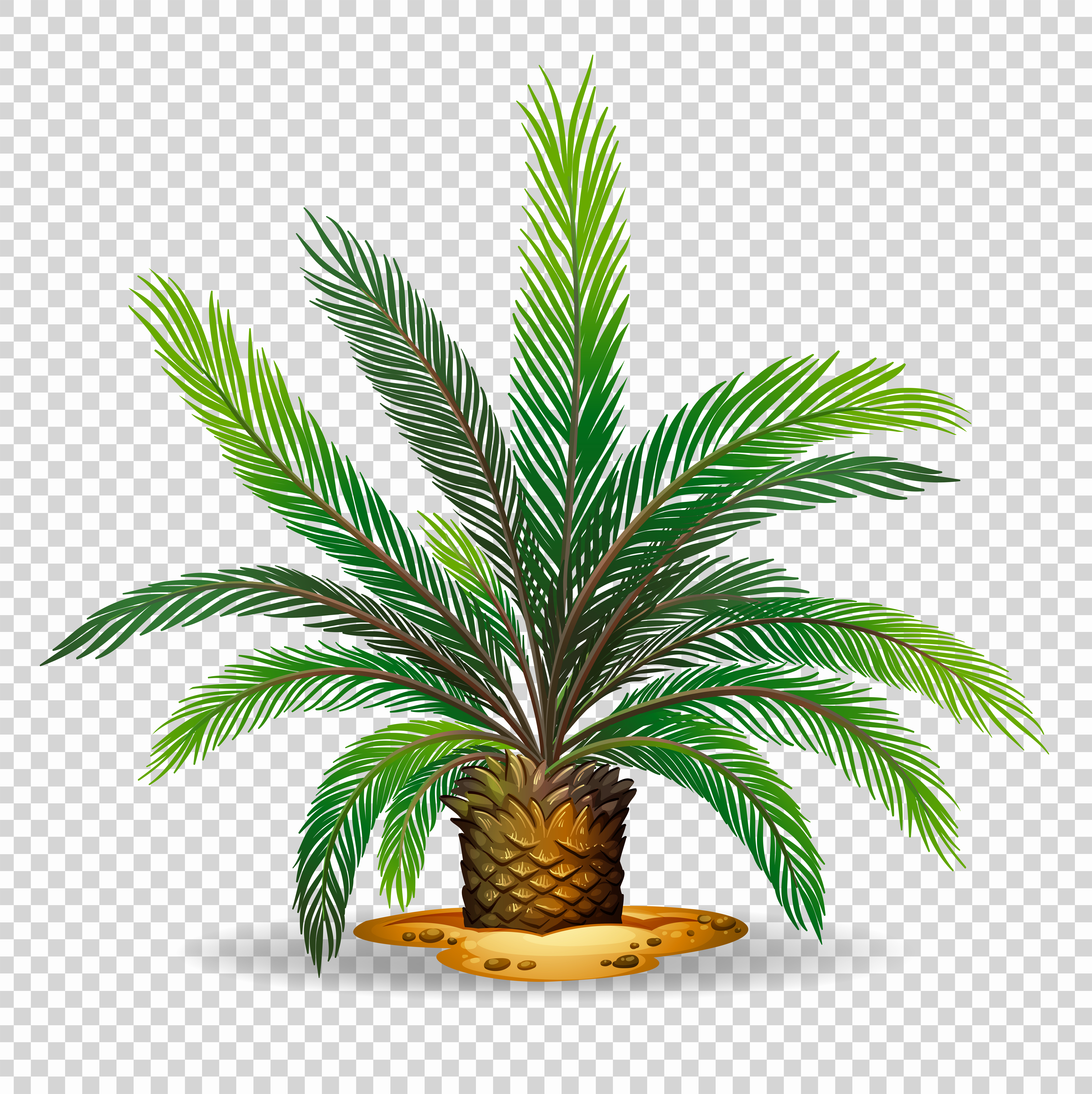 Palm Tree On Transparent Background Download Free