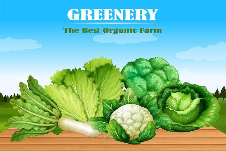 Många slags gröna grönsaker vektor