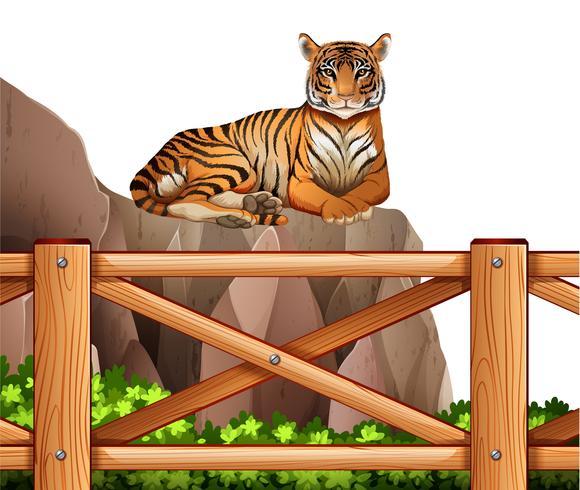 Een tijger boven de klif vector