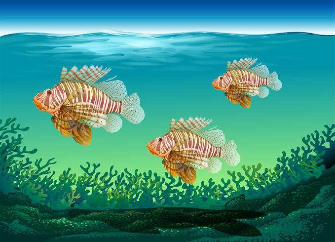 Onderwaterscène met drie vissen die zwemmen vector