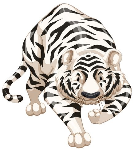 Weißer Tiger vektor