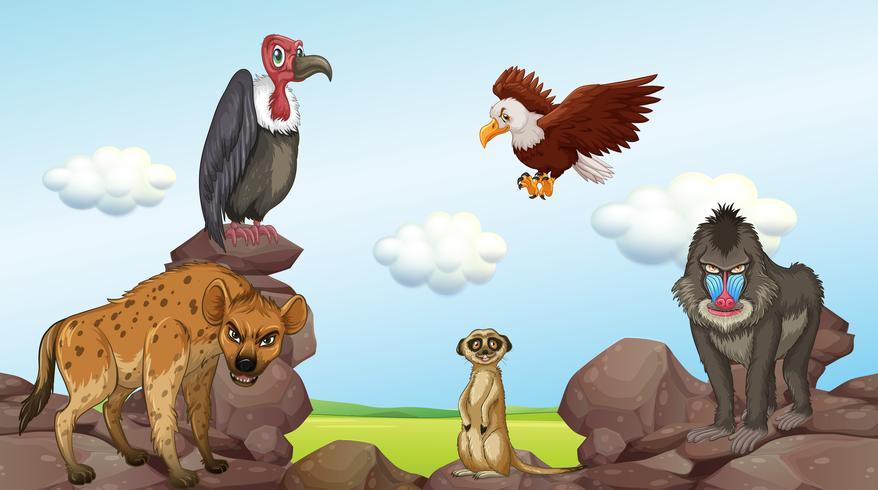 Animales salvajes de pie en las rocas