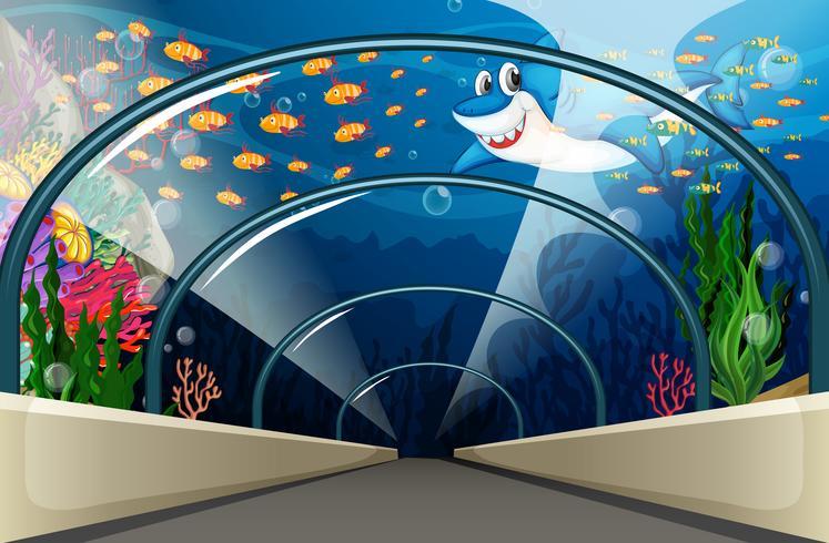 Acuario público con peces y arrecifes de coral.