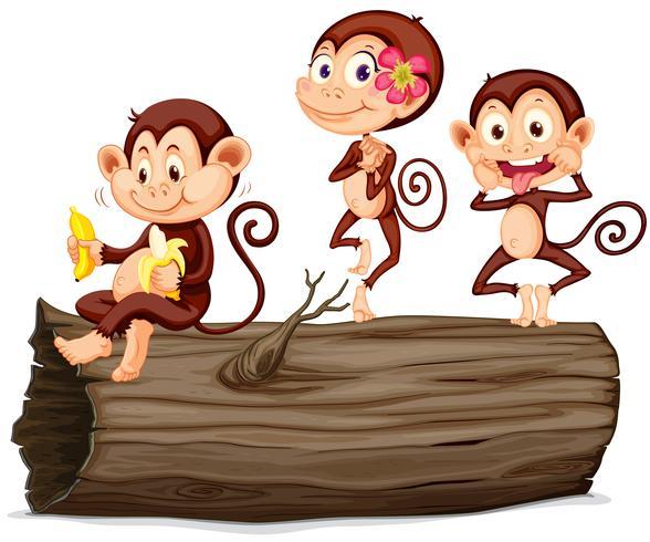 Three monkeys on the log
