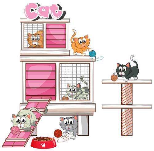 Molti gattini in pethome