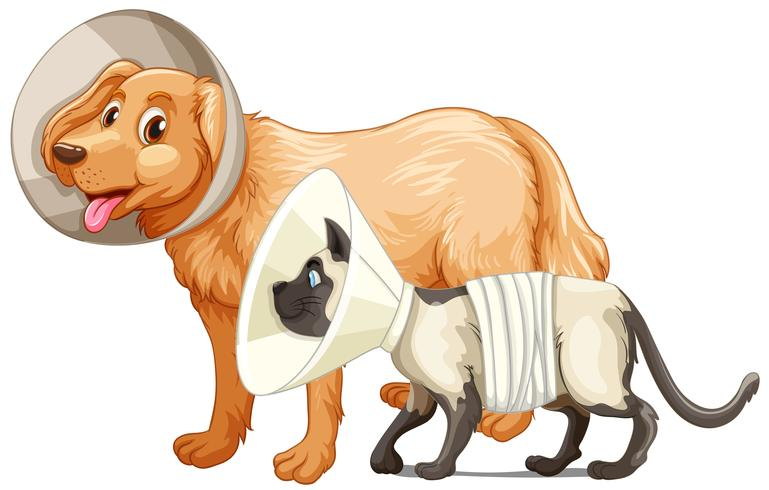 Cão e gato com coleiras