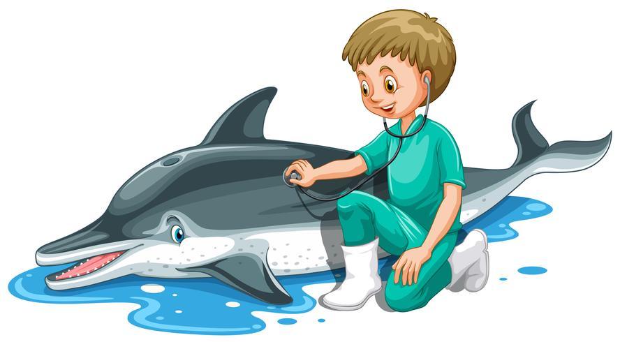 Vet checking up dolphin