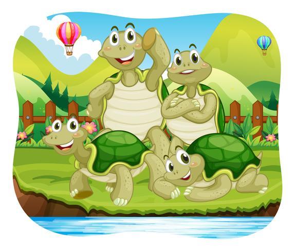 schildpadden vector