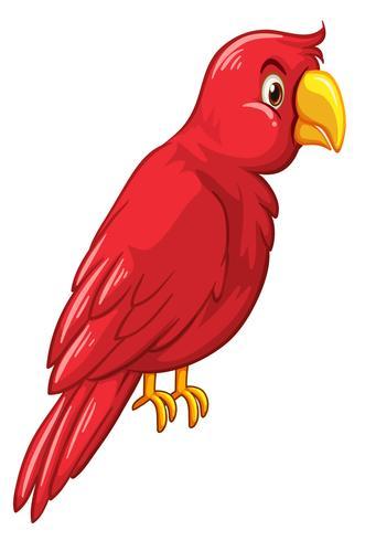 Roter Vogel auf weißem Hintergrund vektor