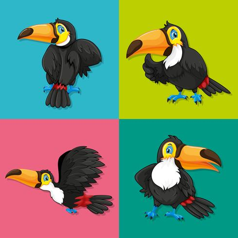 Toucan in four frames