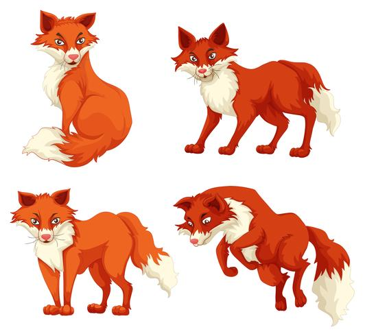 Vier vossen in verschillende poses