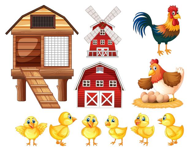 Hühner und Küken