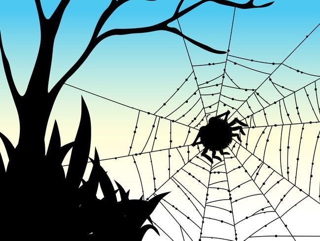 Silhuett spindel på webben