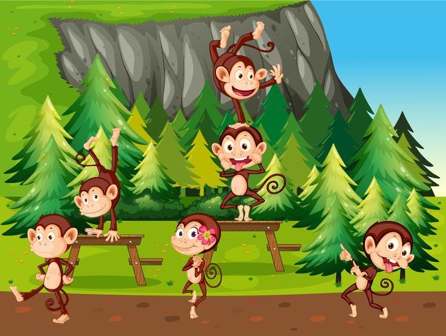 Macacos e parque