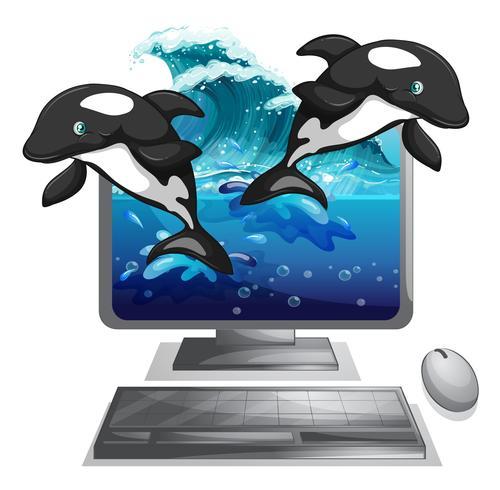 Dois dolphines pulando fora da tela do computador