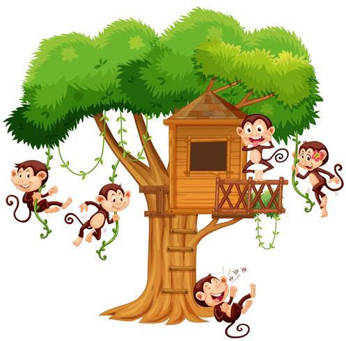 Apor leker på treehouse