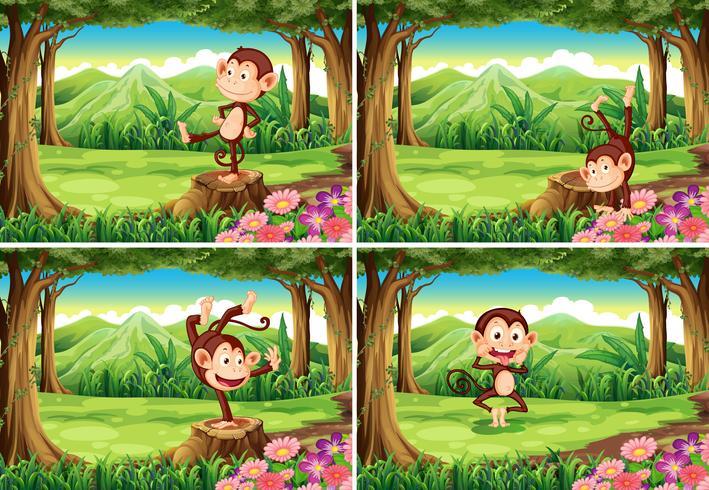 Fyra scener av apor i parken