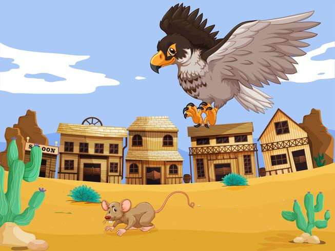 Águia captura rato no deserto
