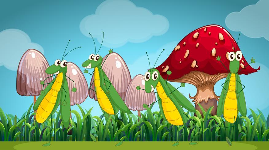 Fyra gräshoppor på gräsmattan