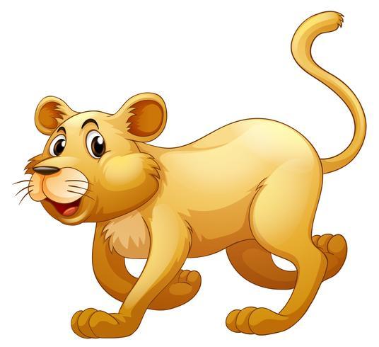 Leão andando sozinho em whitebackground
