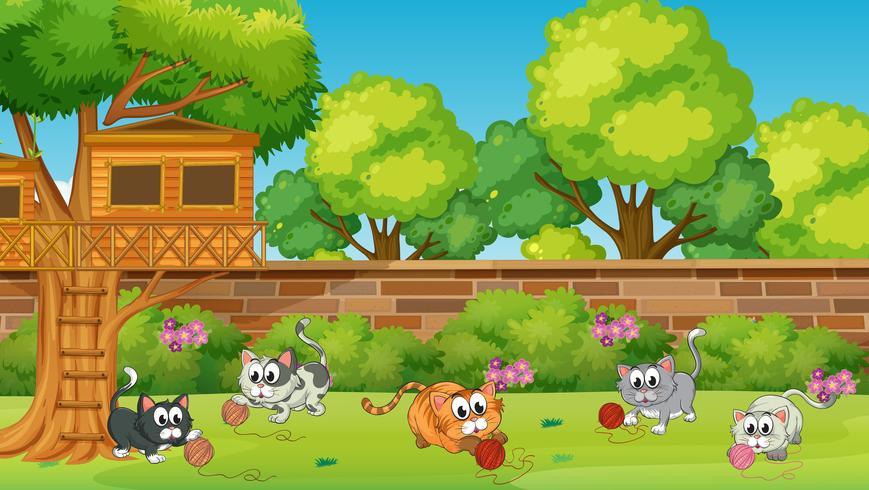 Cinq chatons jouant dans le jardin