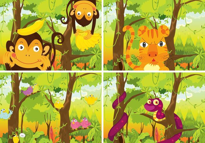 Många djur som bor i djungeln
