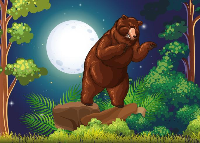 Wild bear in the jungle at night