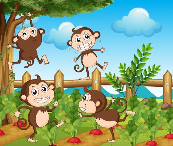 Vier apen in de moestuin vector