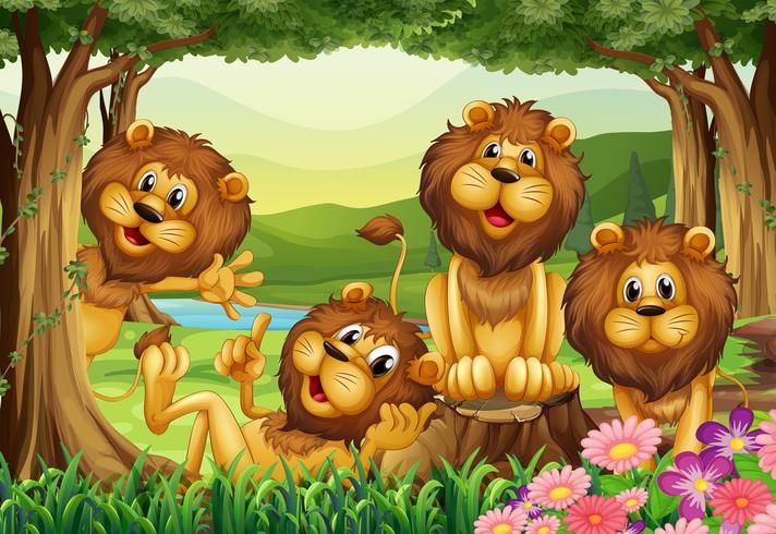 Lion som bor i djungeln vektor