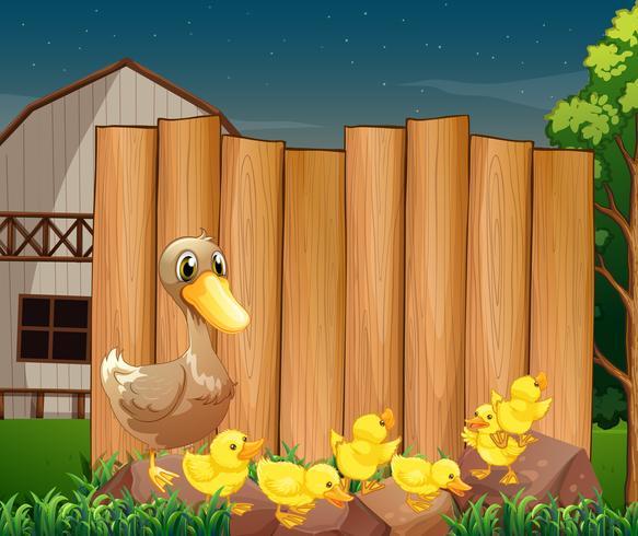 Holzschild und Enten im Bauernhof