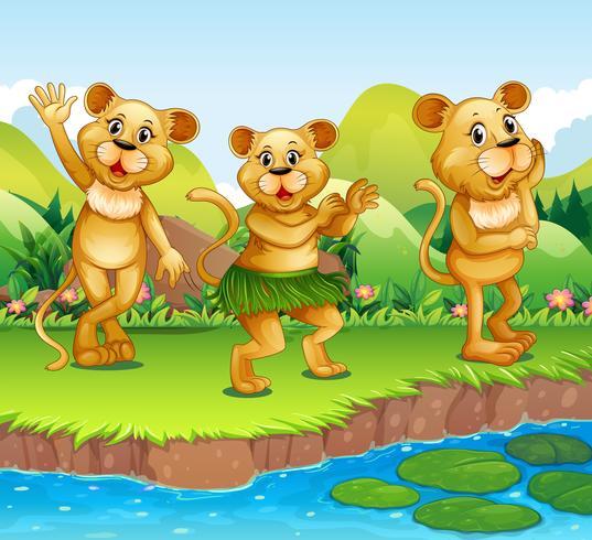 Leoni che ballano vicino al fiume