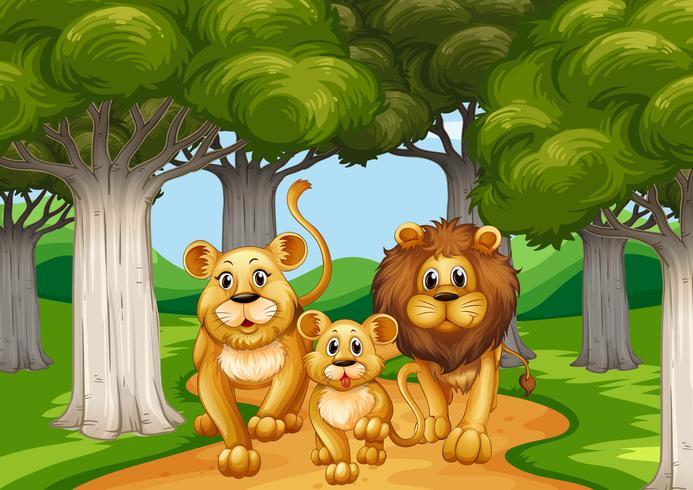 Três leões andando na floresta