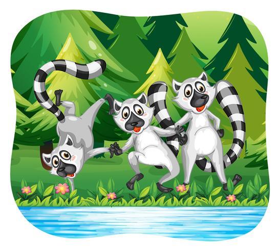 Drie lemuren die gelukkig zijn door de rivier vector