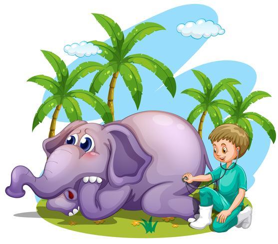 Veterinario che esamina l'elefante nel parco