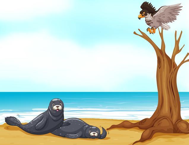 Focas e águia no mar