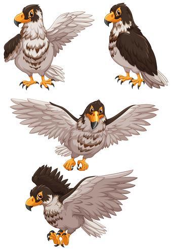 Vier adelaars in verschillende poses vector