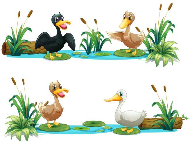 Enten, die im Teich leben