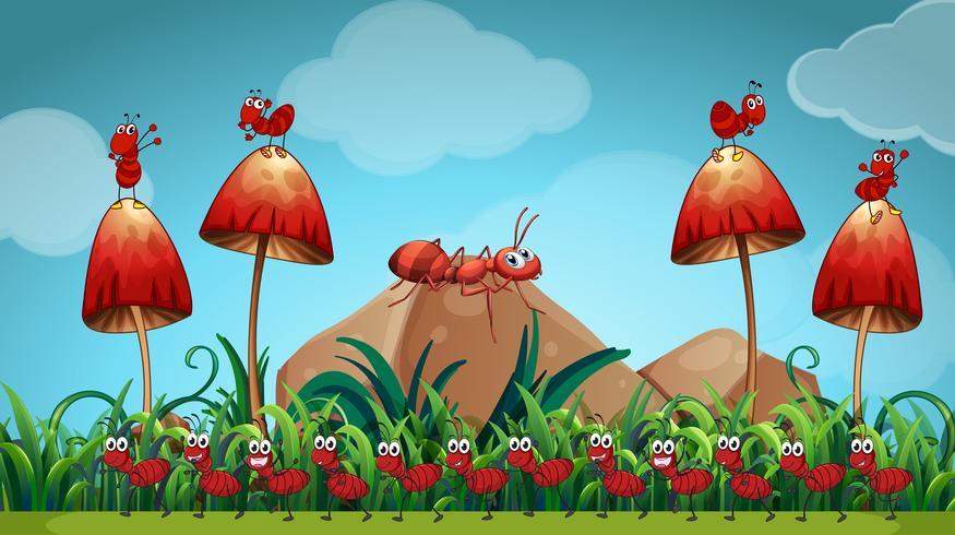 Ants in the mushroom garden