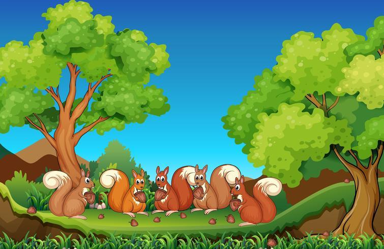 Cinq écureuils mangeant des noix dans un parc