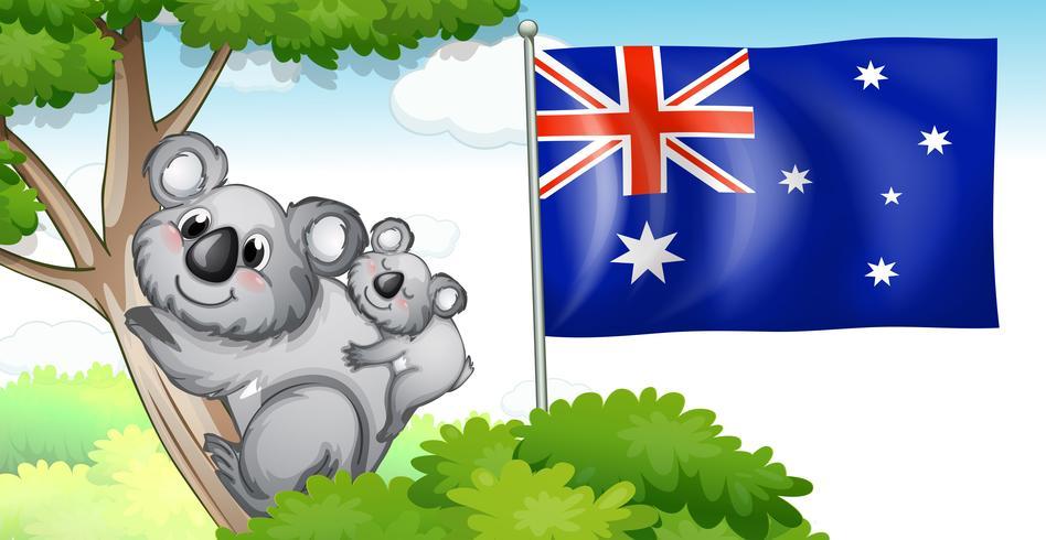 Bandera de Australia y koala en árboles