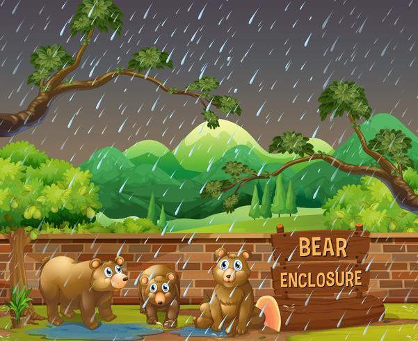 Três, ursos, em, a, jardim zoológico, ligado, dia chuvoso