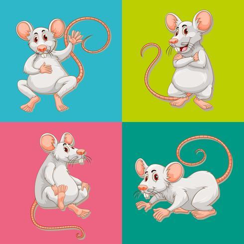 Muis op vier kleurenachtergronden vector