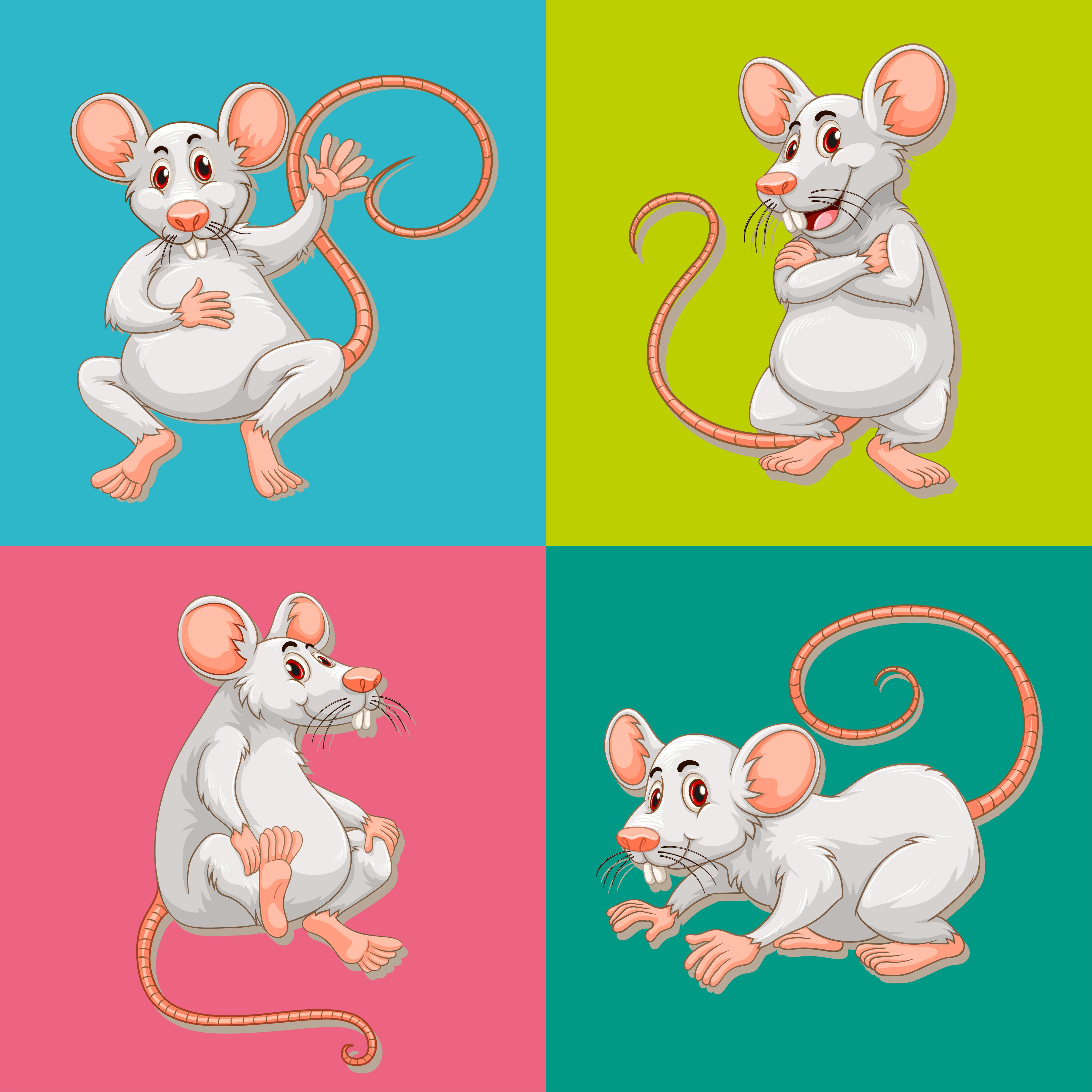 卡通老鼠 免費下載   天天瘋後製