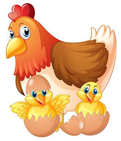 Mãe galinha e dois filhotes em ovos