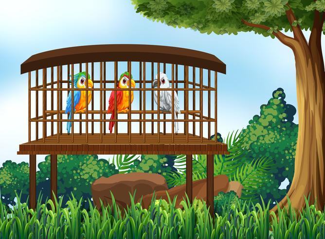 Tres pájaros loros en jaula de madera