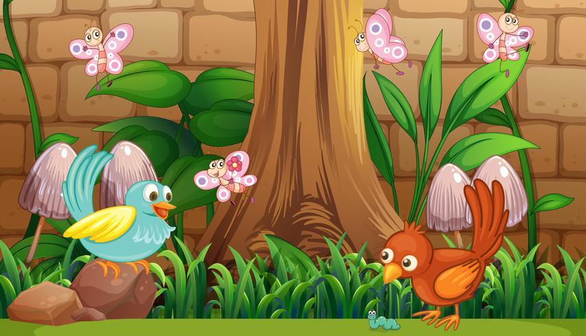 Pássaros e borboletas no jardim