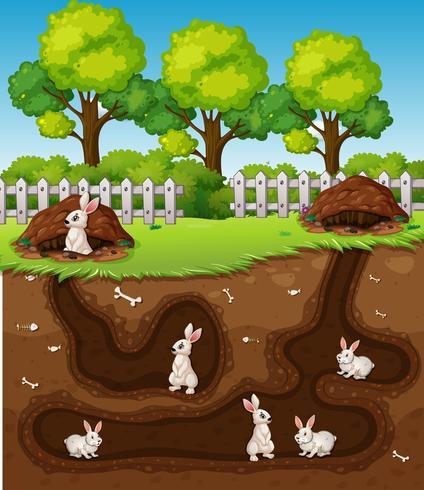 Lapin creusant le trou